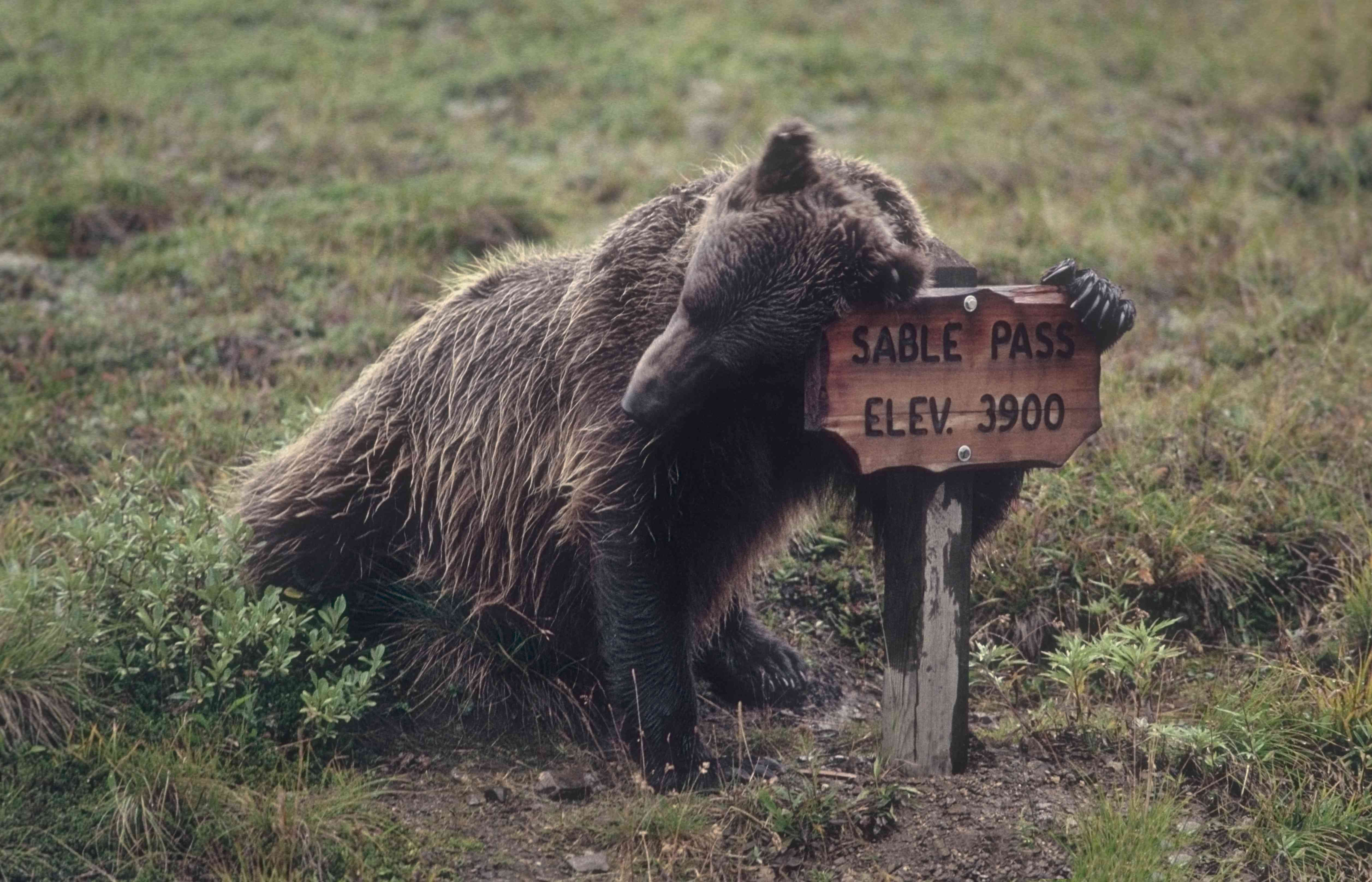 Grizzly & Sable Pass sign.