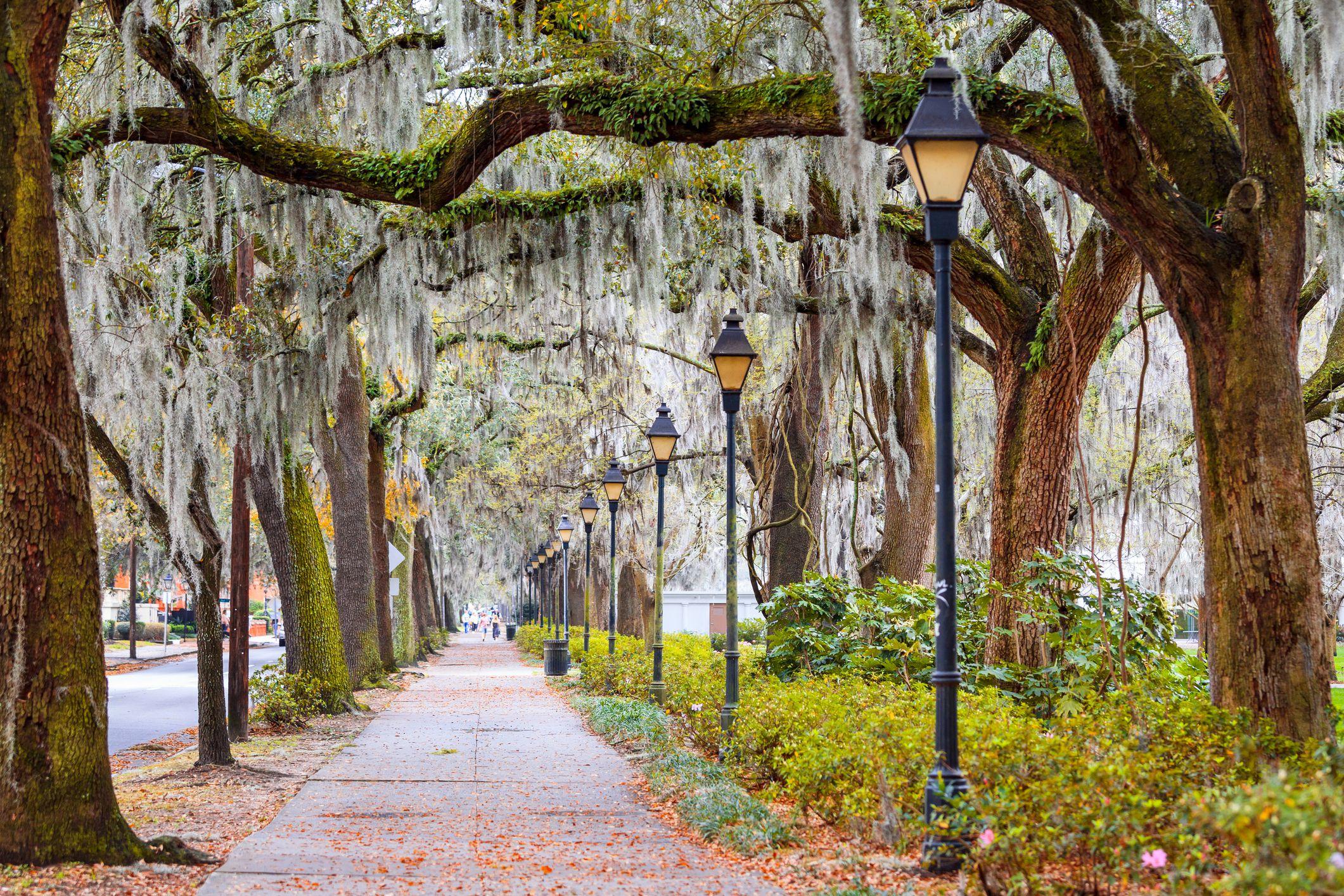 Spanish Moss, Street, Savannah, Georgia, America