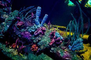 Coral Reef At National Aquarium