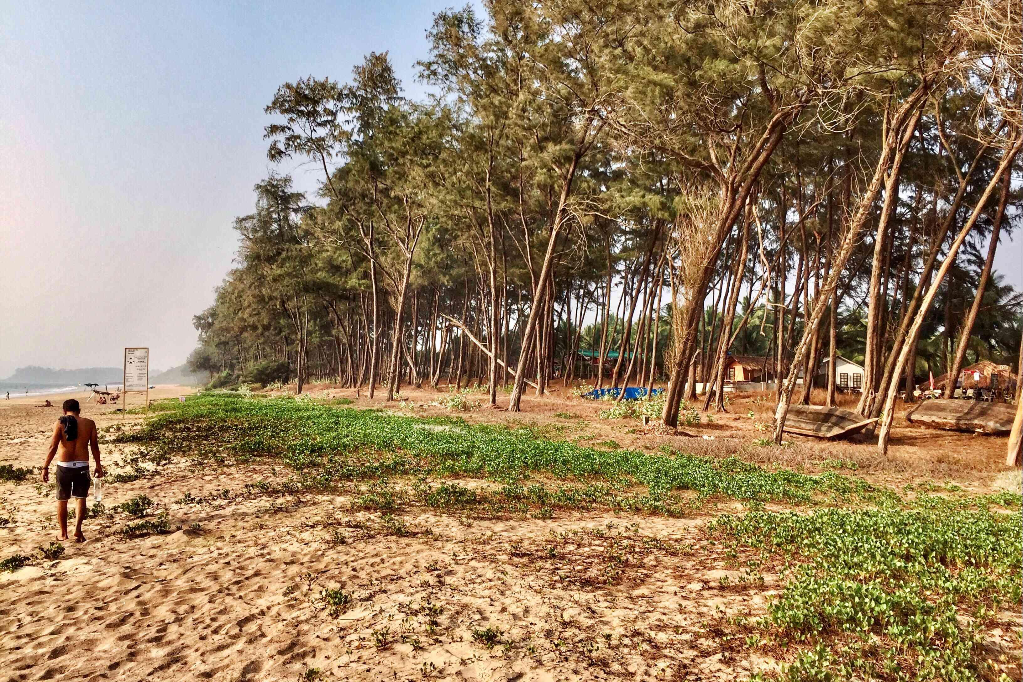 Galjibag beach, Goa.