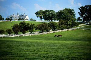 USA, Kentucky, Lexington, horse farm