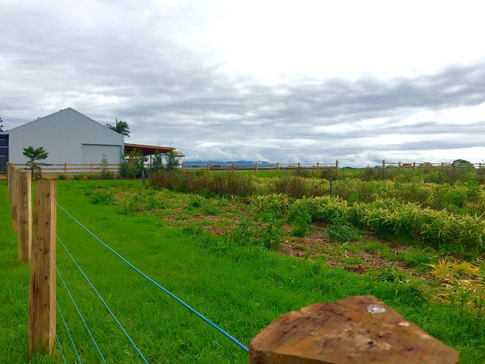 The Farm in Byron Bay, Australia. Photo Credit: Michaela Guzy.