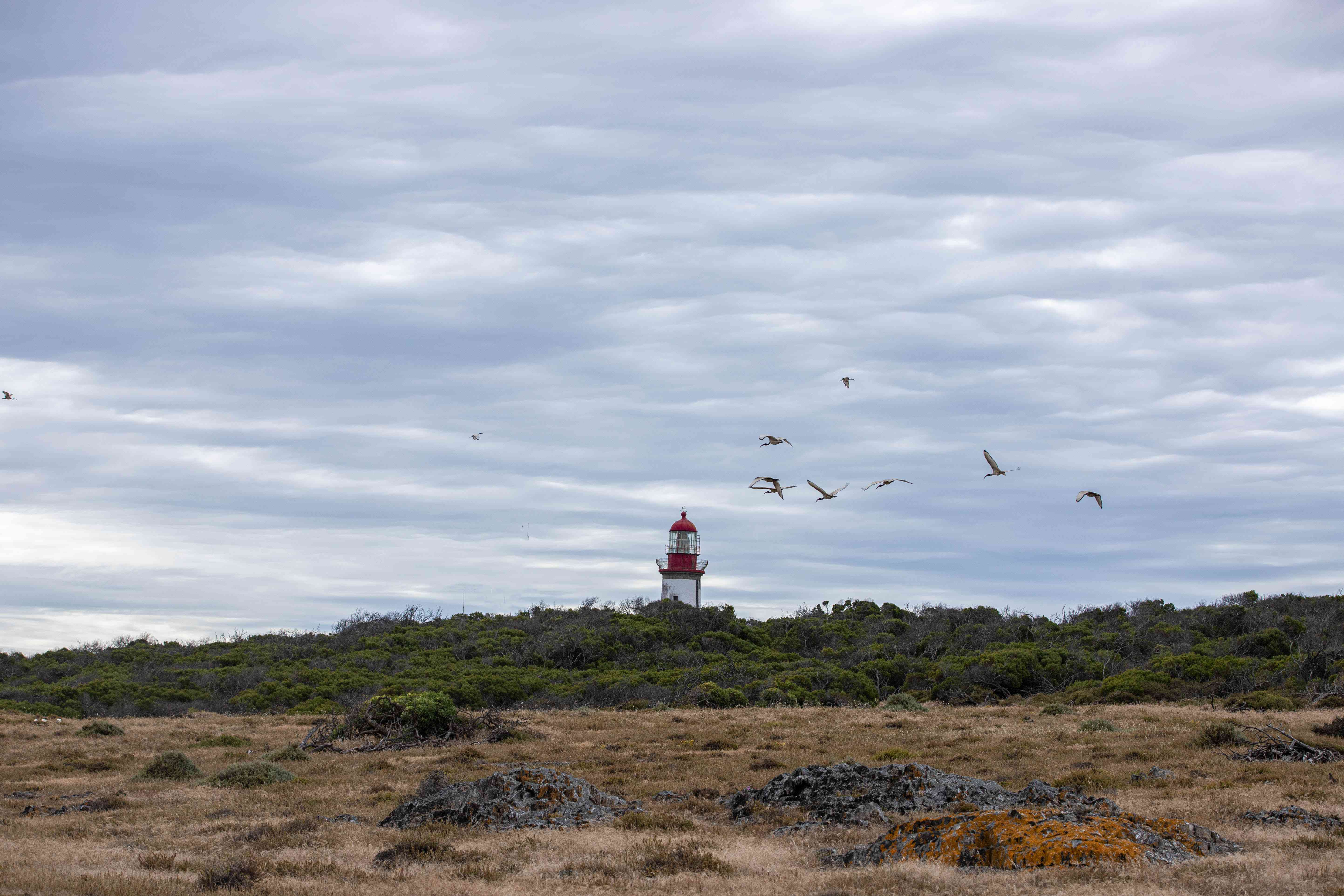 Lighthouse on Robben Island