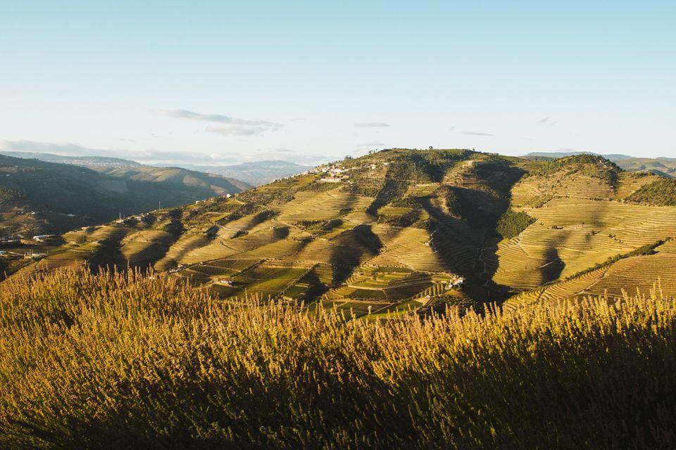 Las colinas de los viñedos del Duero durante la hora dorada del atardecer