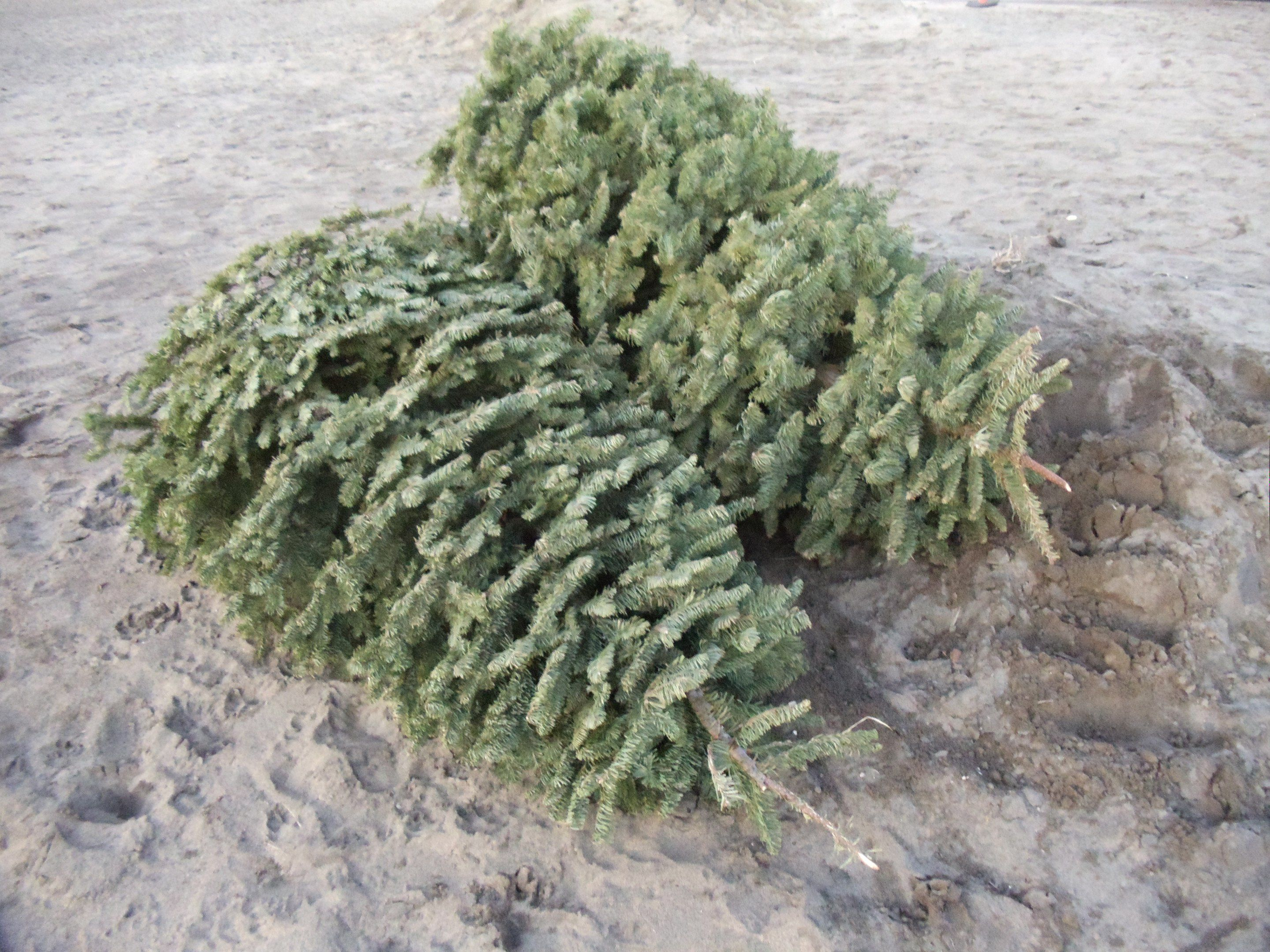 Drop f Your Christmas Trees Here in KC