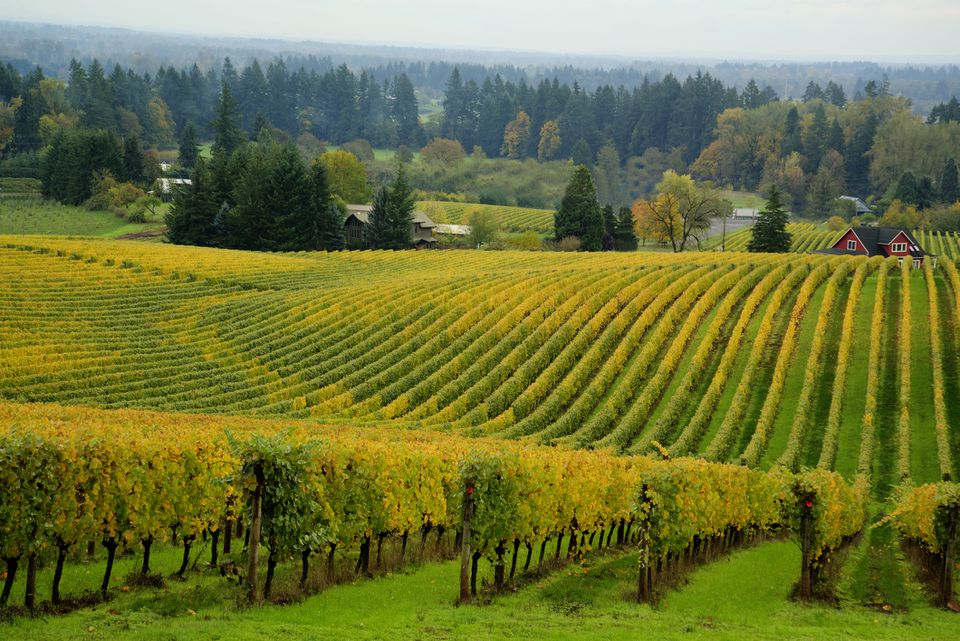 Vineyard, Willamette Valley, OR