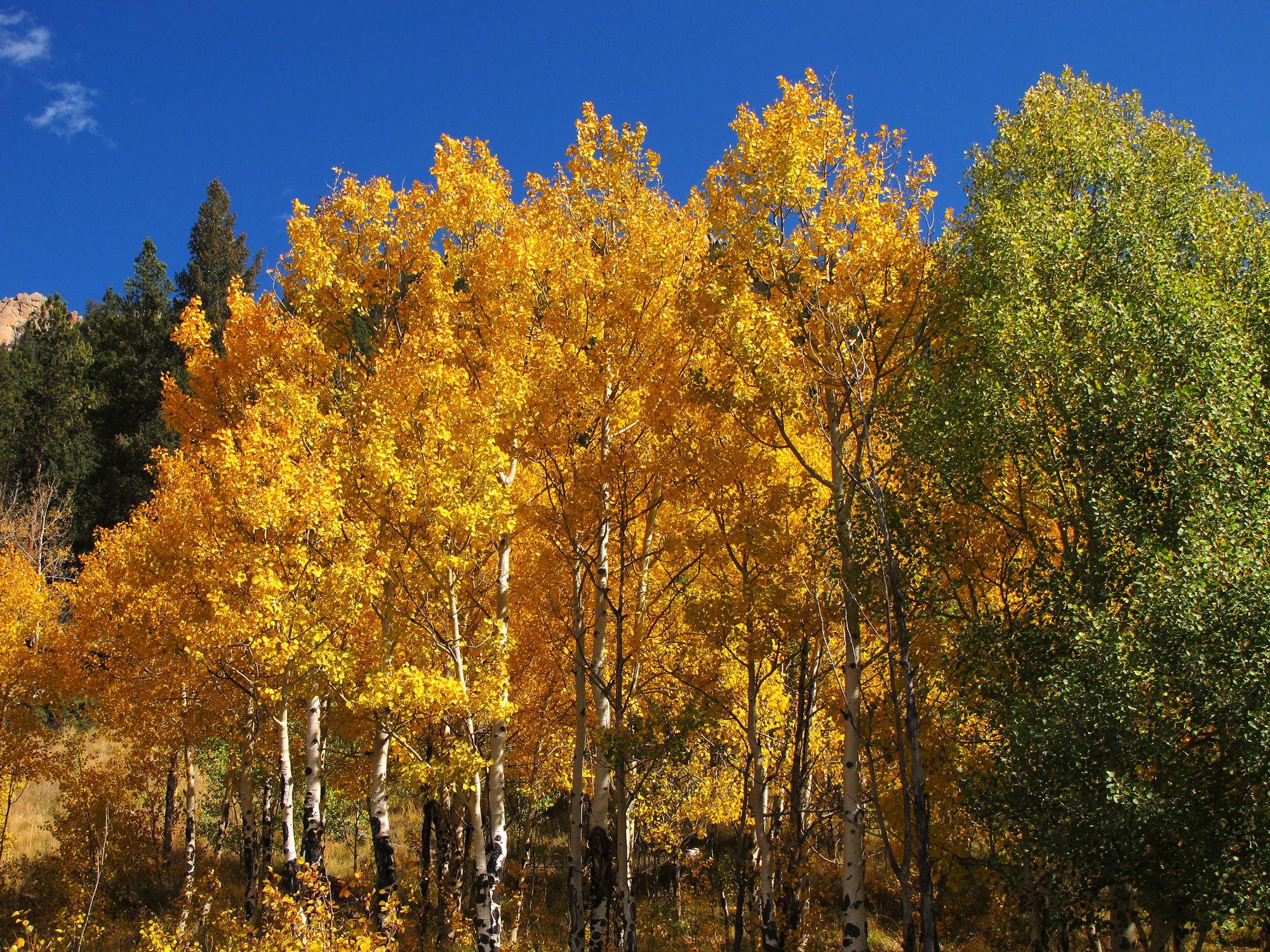 Golden autumn colors in Golden Gate Canyon State Park (Rocky Mountains, Colorado).