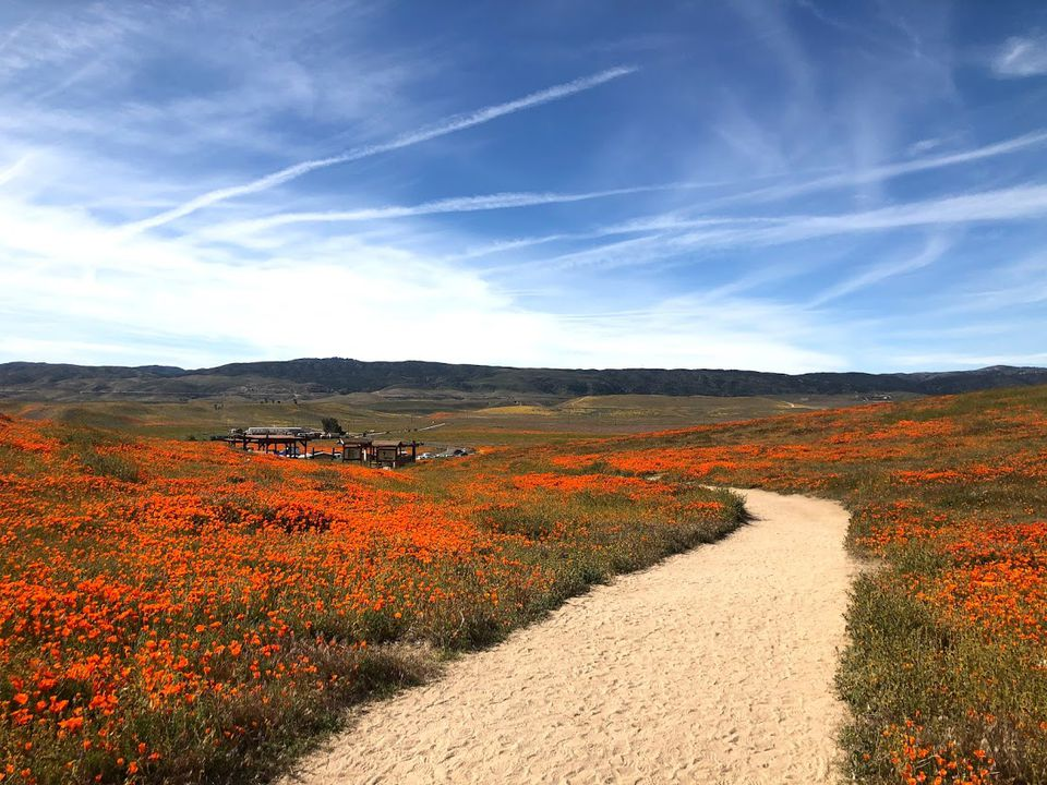 Antelope Valley covered in poppies