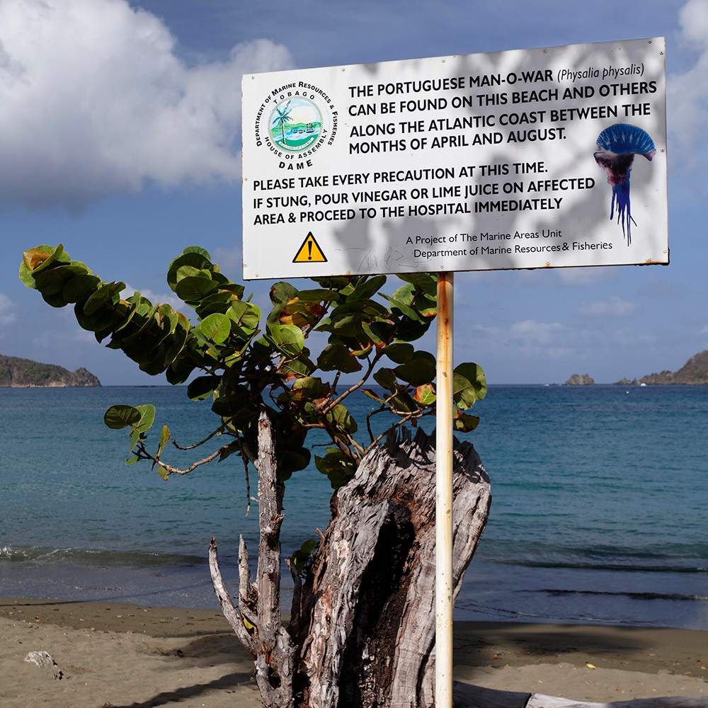Sign on beach warning of Portuguese Man O'War