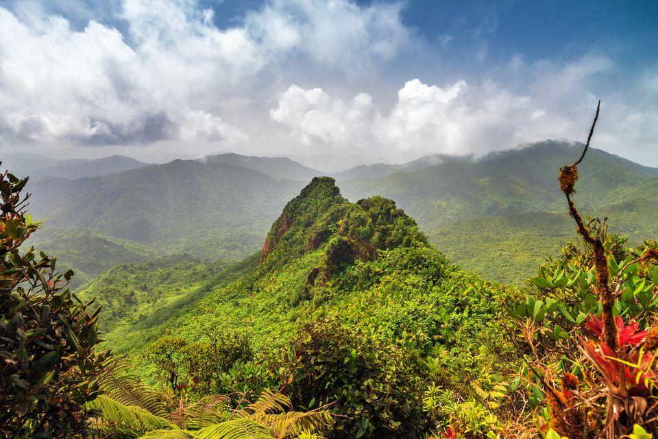 Vibrant view El Yunque