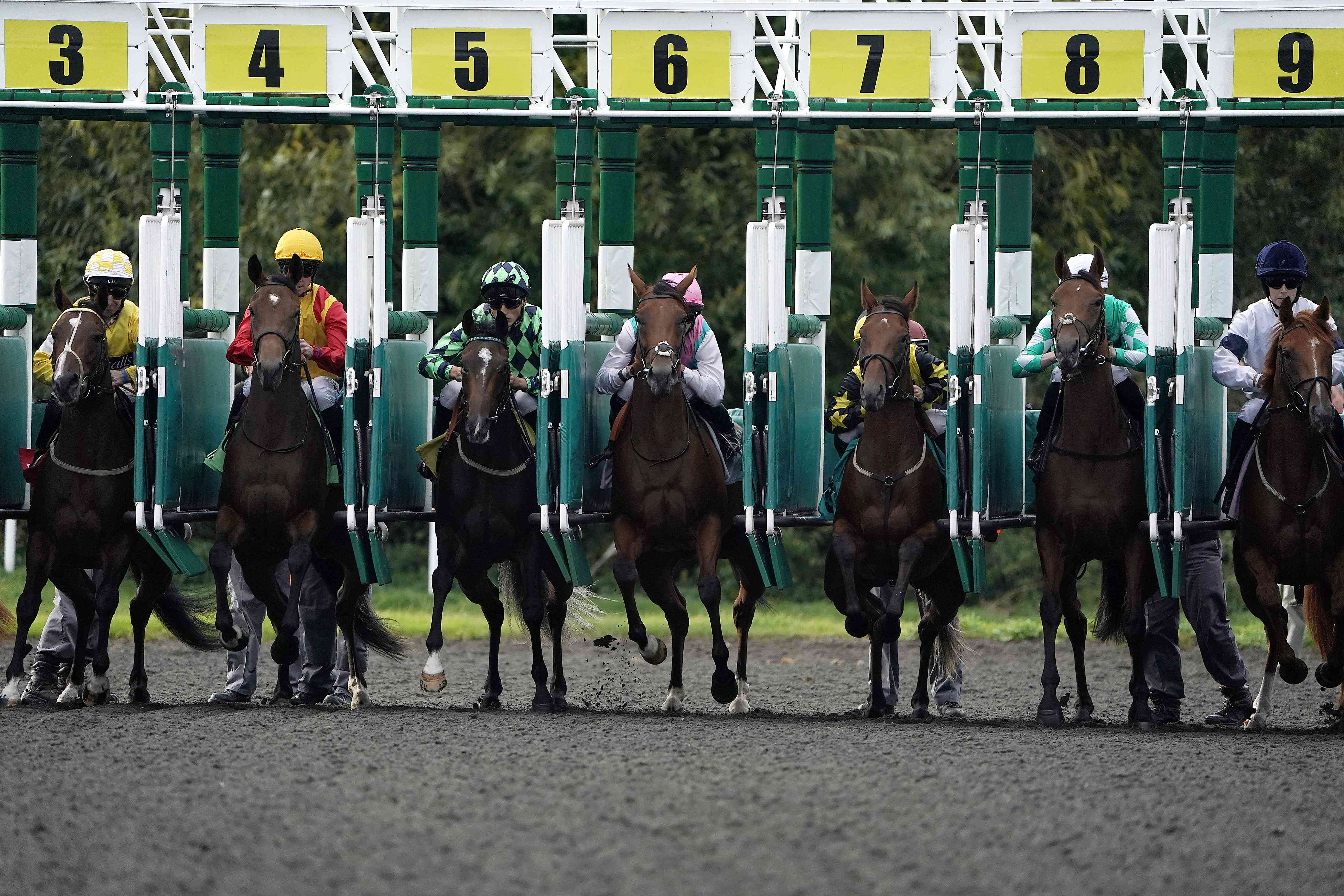 Horses leave their starting stalls at Kempton Park Racecourse