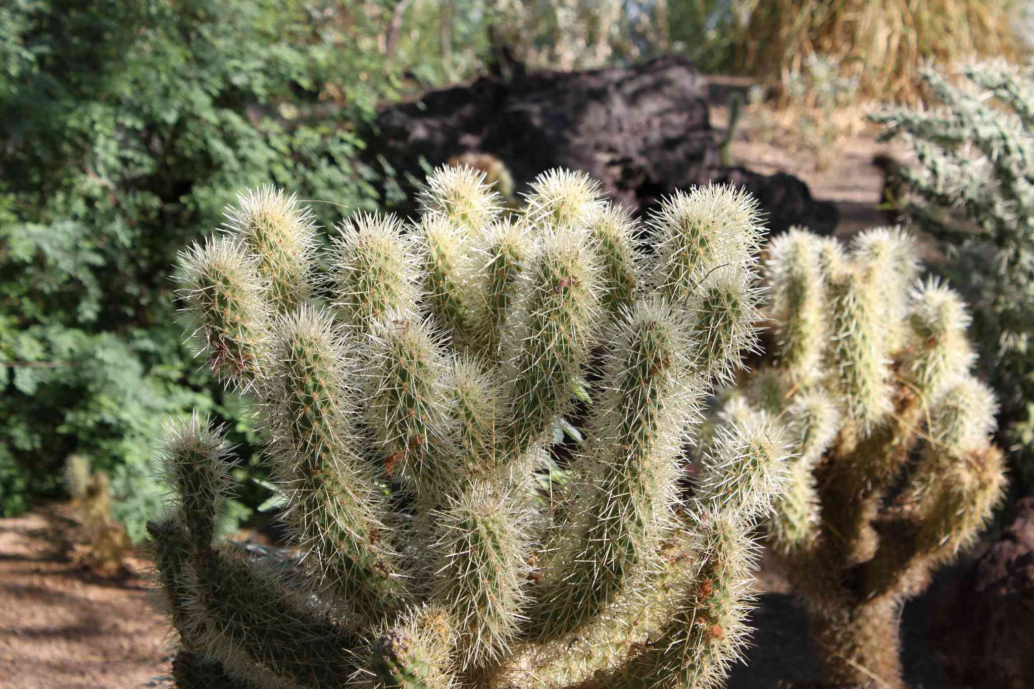 Ethel M. Chocolates Botanical Cactus Garden