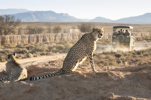 Best Game Reserves for Safari Near Cape Town