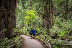 Muir Woods Redwood Creek Trail Hikers