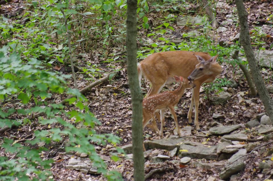 Deer photo taken at Powder Valley Nature Center