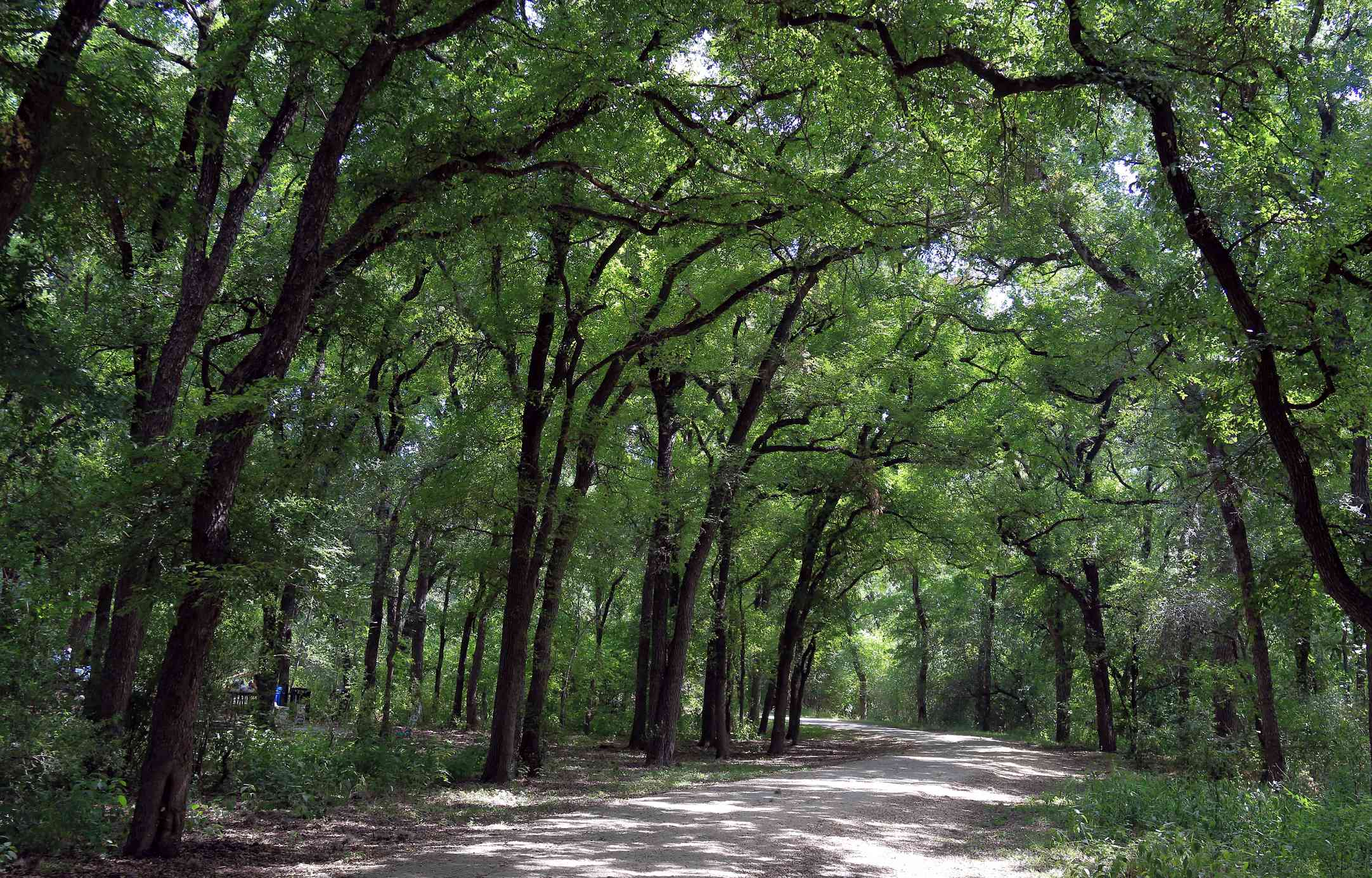 Scenic trail in Mayfield park with trees creating a canopy over it