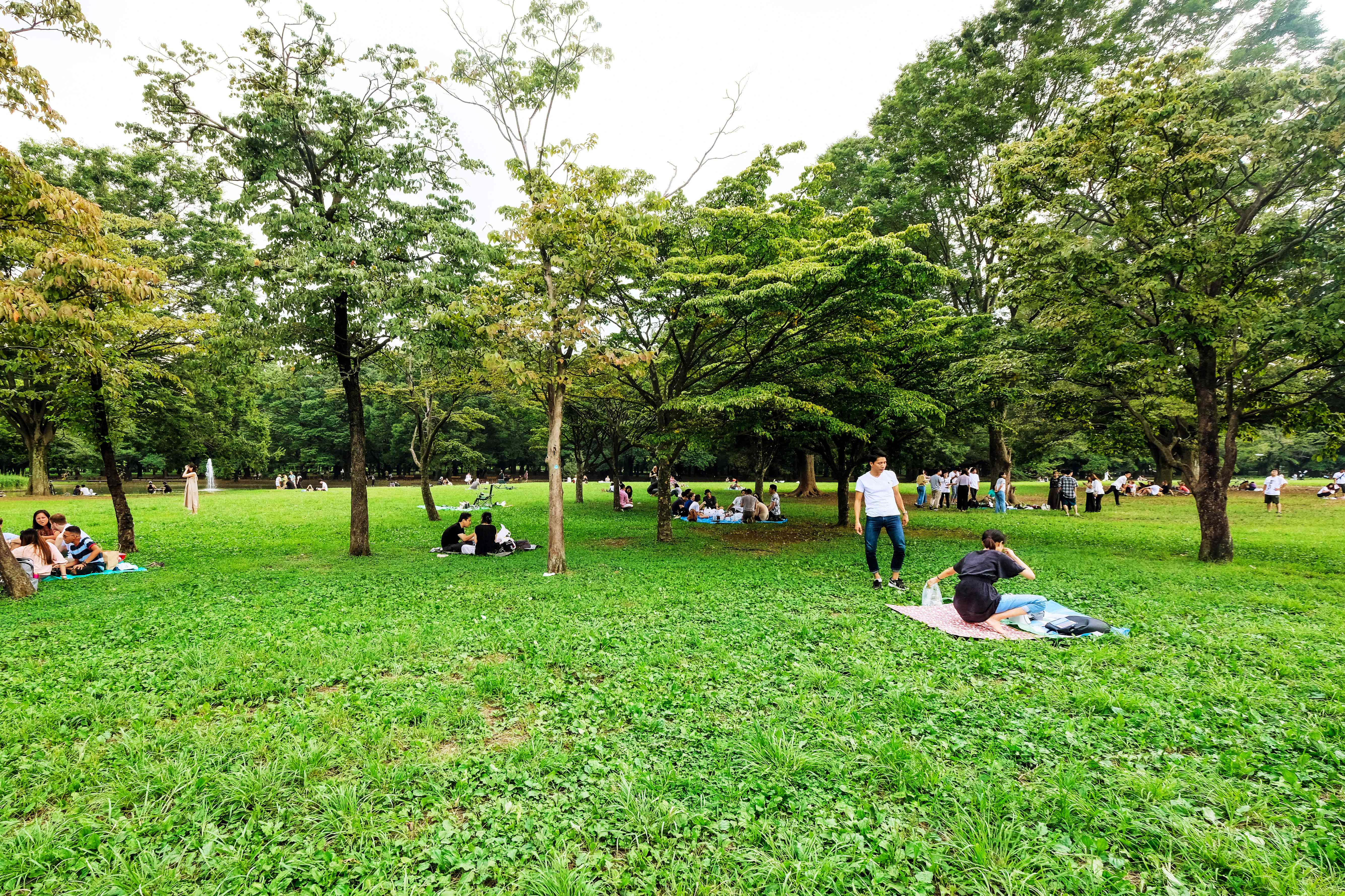 People hanging out in Yoyogi Park