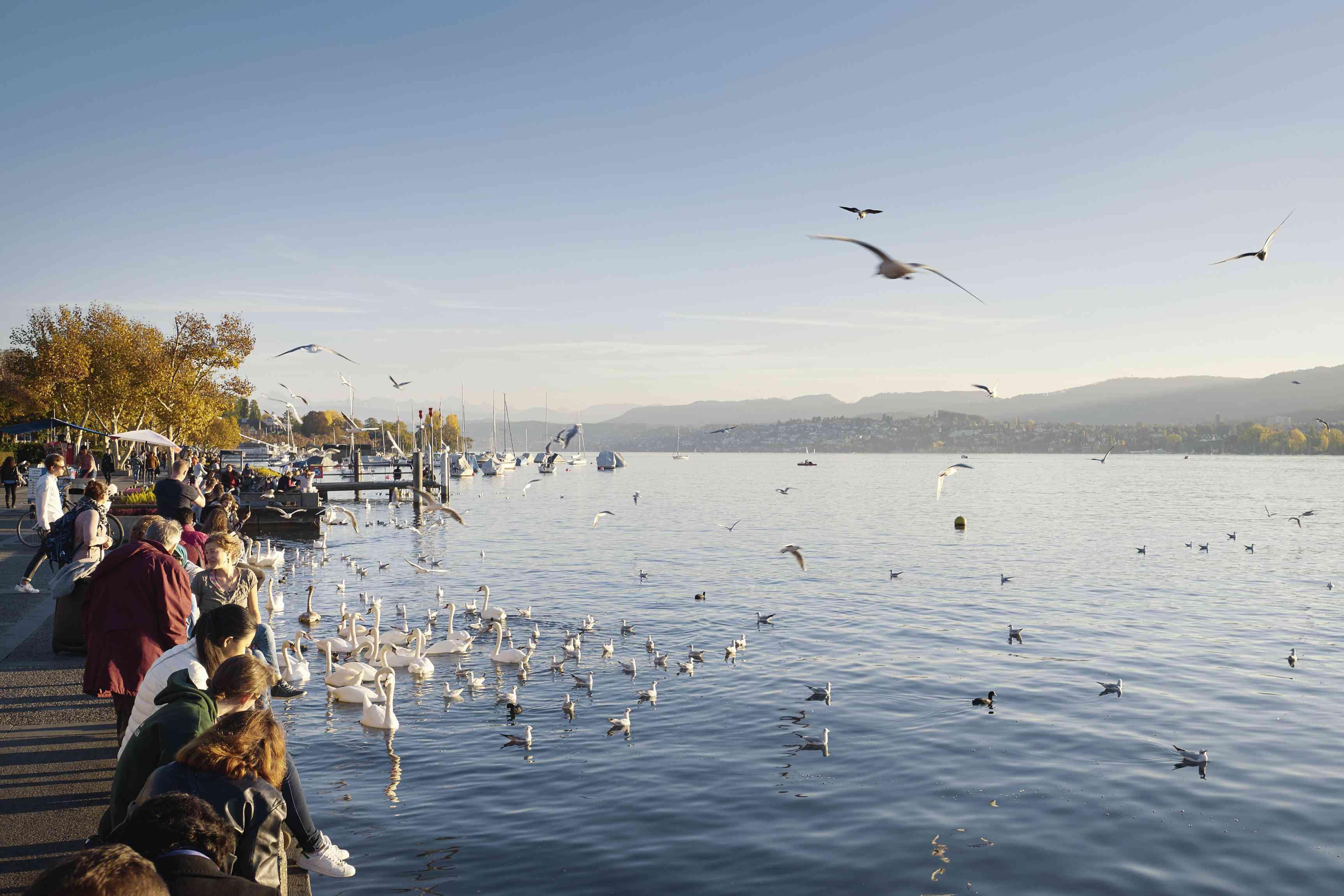 Alimentar pájaros en el paseo del lago