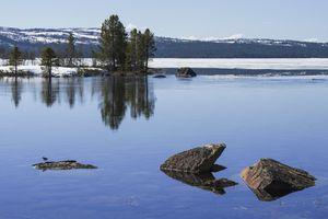 Lake near Sevettijärvi in June, little bird on stone, Lapland, Finland