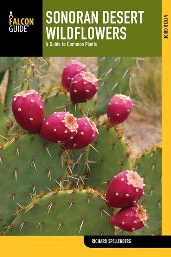 Arizona wildflowers nude-4018