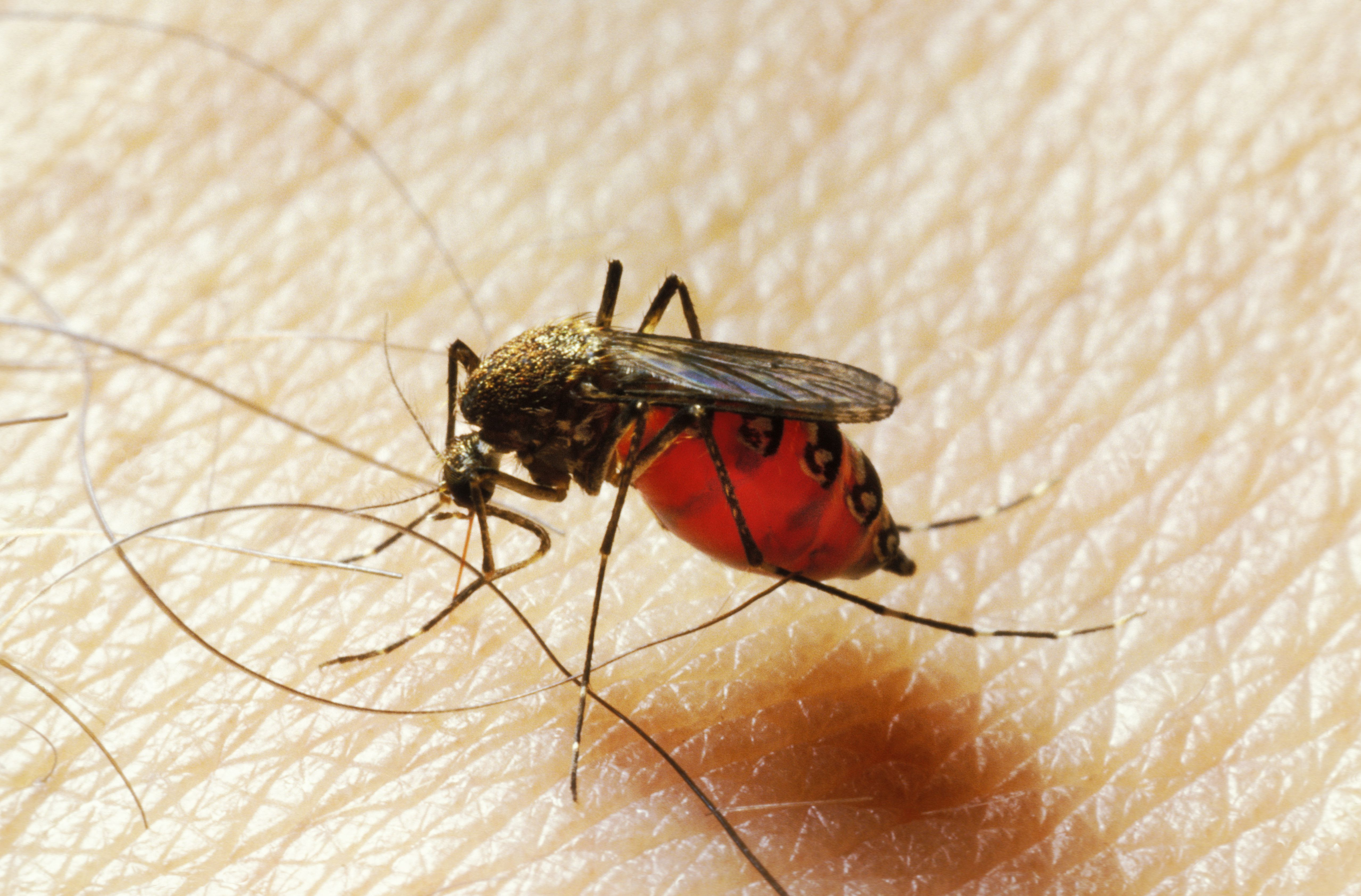 10 Tips for How to Avoid Mosquito Bites: Dengue in Asia