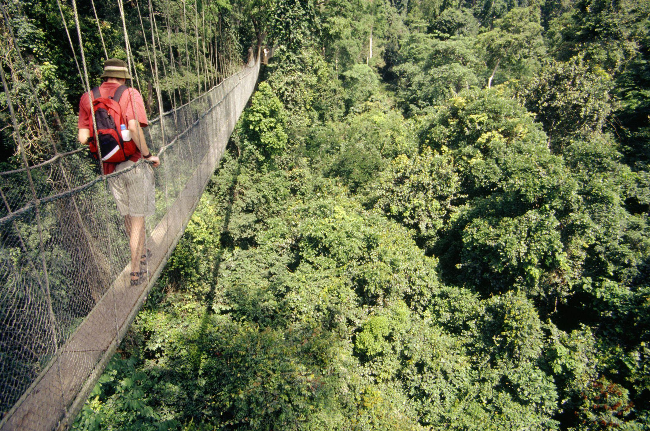 Man walking on a canopy bridge in Kakum National Park