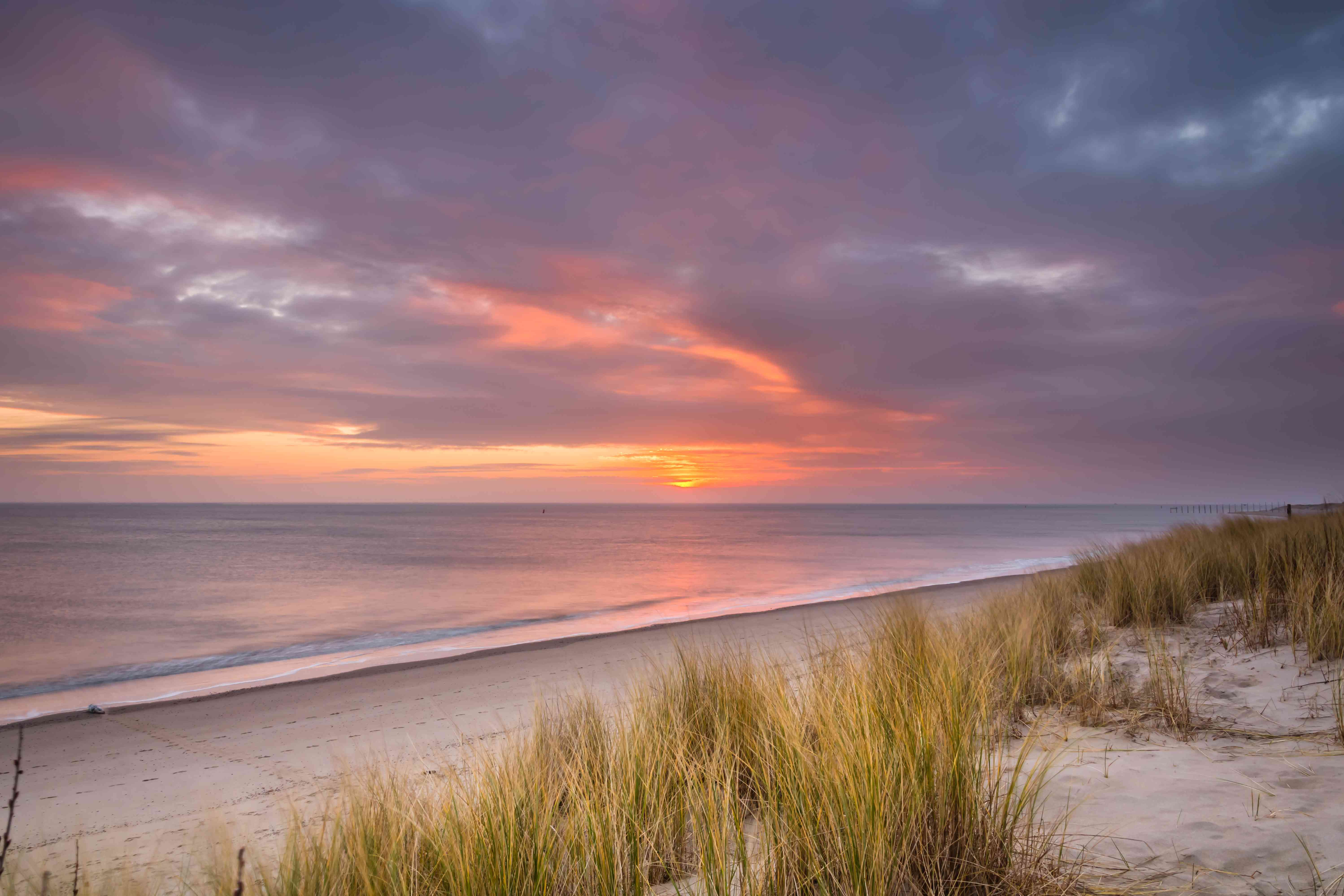 Sunrise on the beach And A Seal in wadden sea