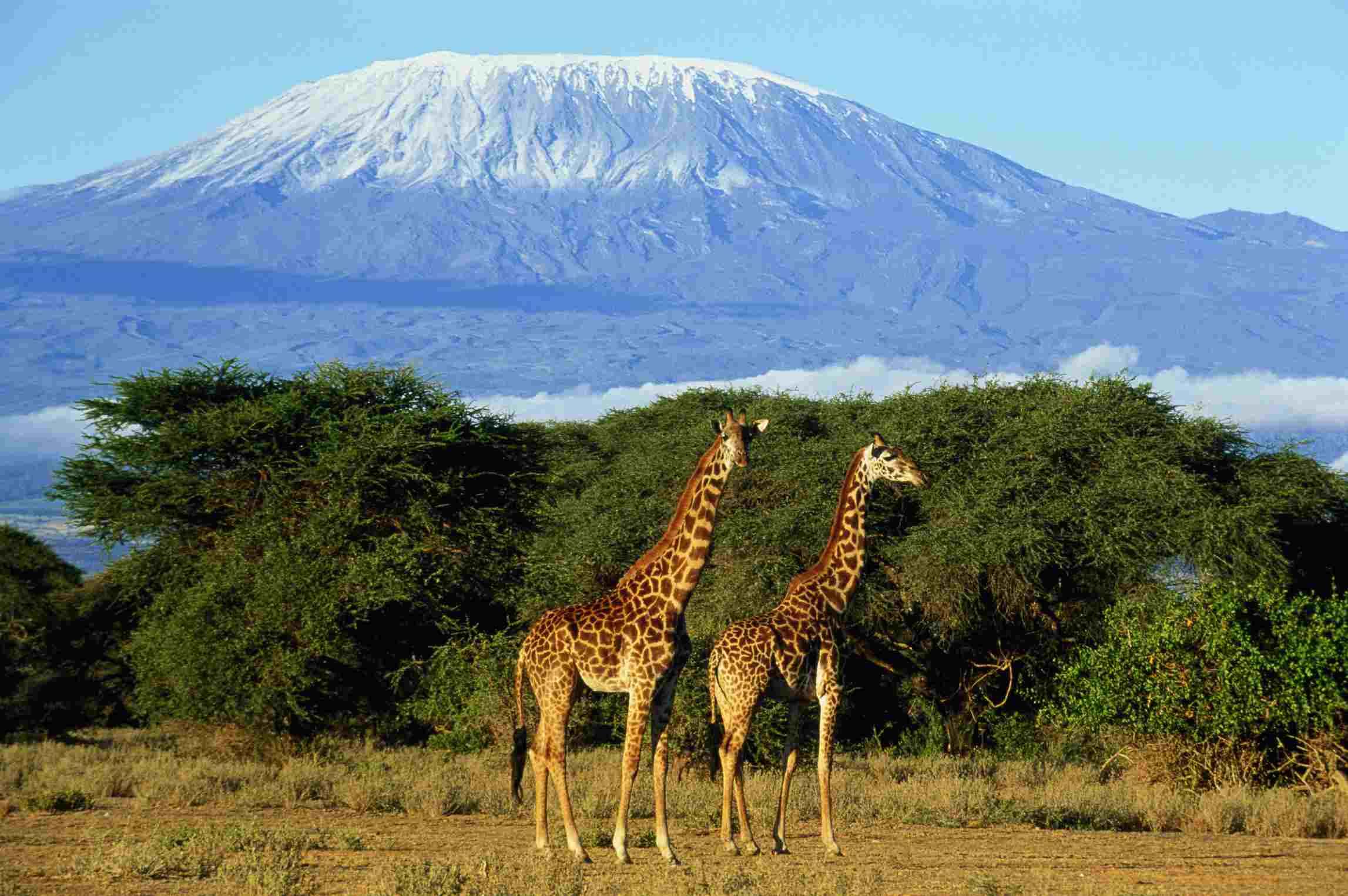 Principales destinos africanos Monte Kilimajaro