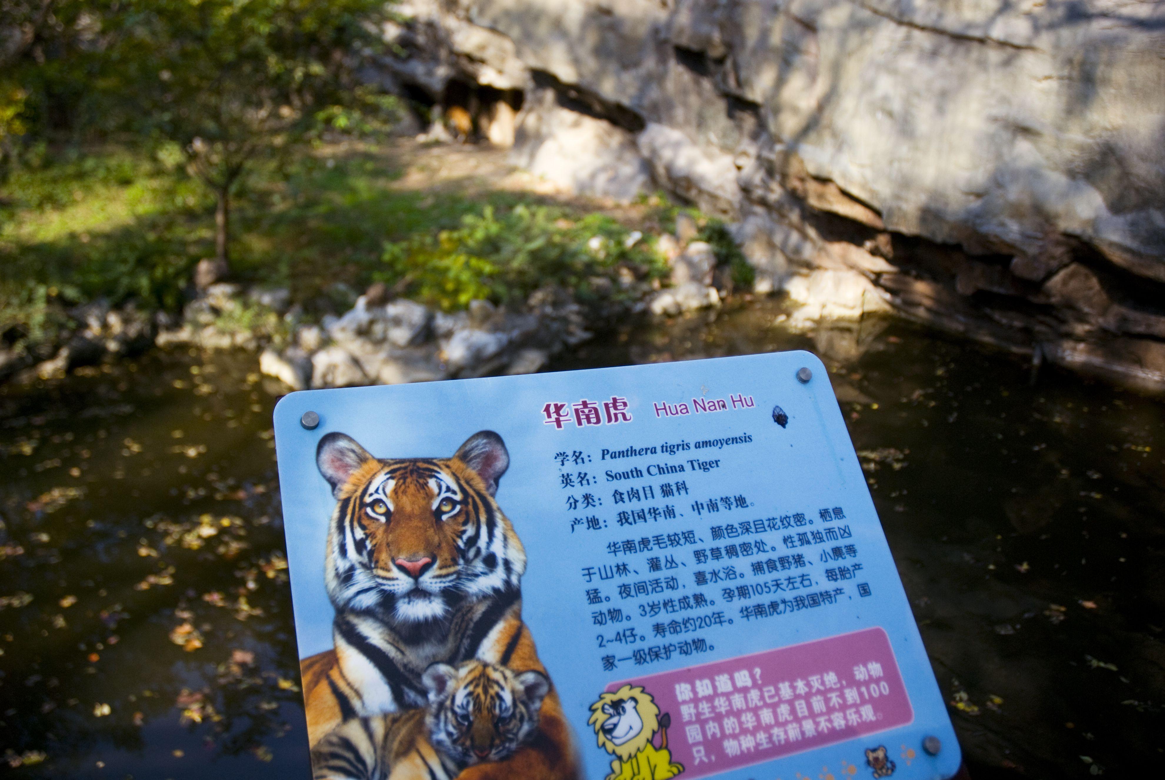 South China Tiger enclosure sign detail, Shanghai Zoo.