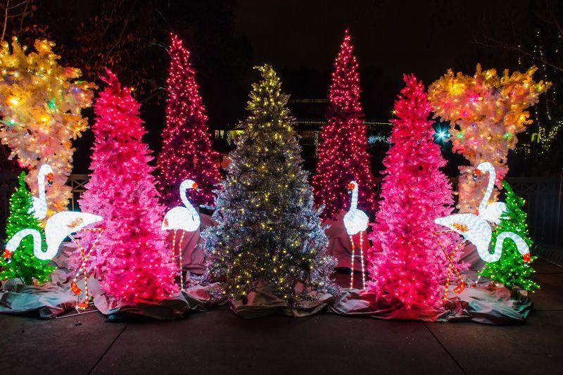 wild lights at st louis zoo - Garden Ridge Christmas Decorations Outdoors