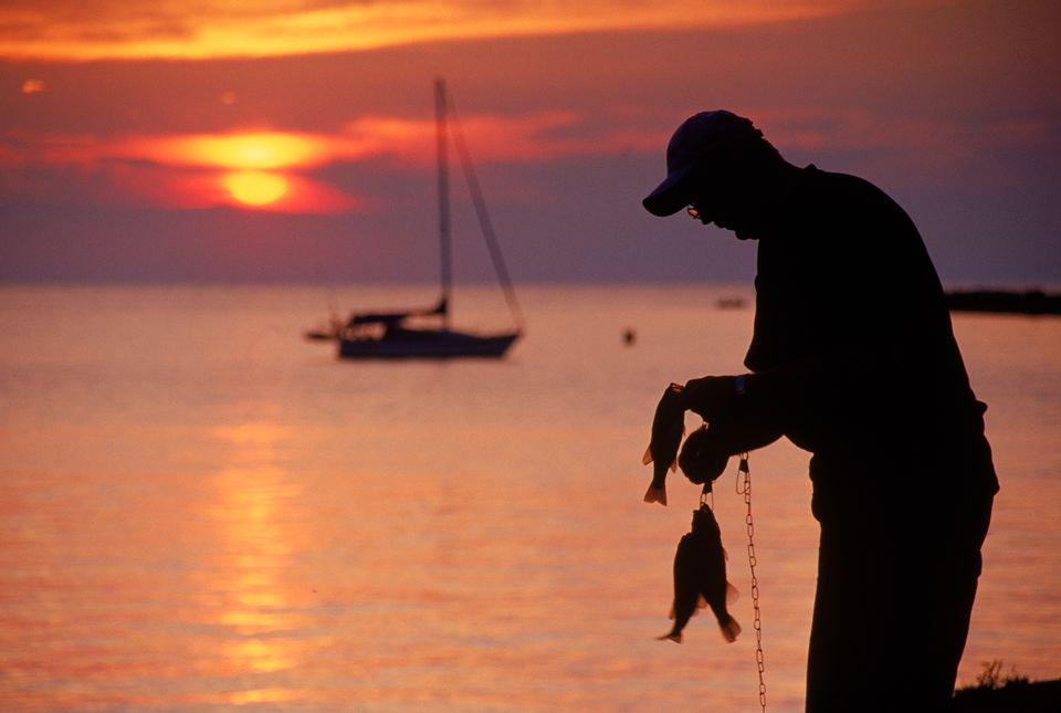 A fisherman pulling his catch off a fishing line