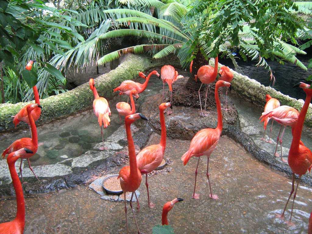 Dallas World Aquarium flamingoes