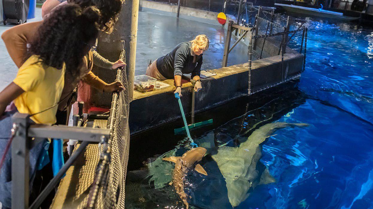 Shark Feeding Tour