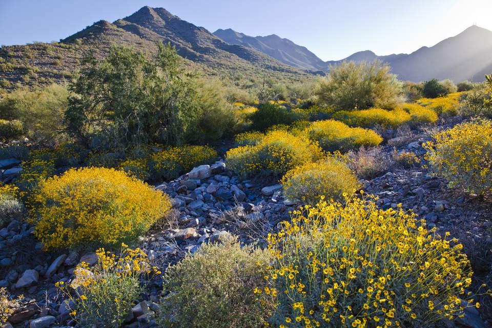 Flowers in Phoenix