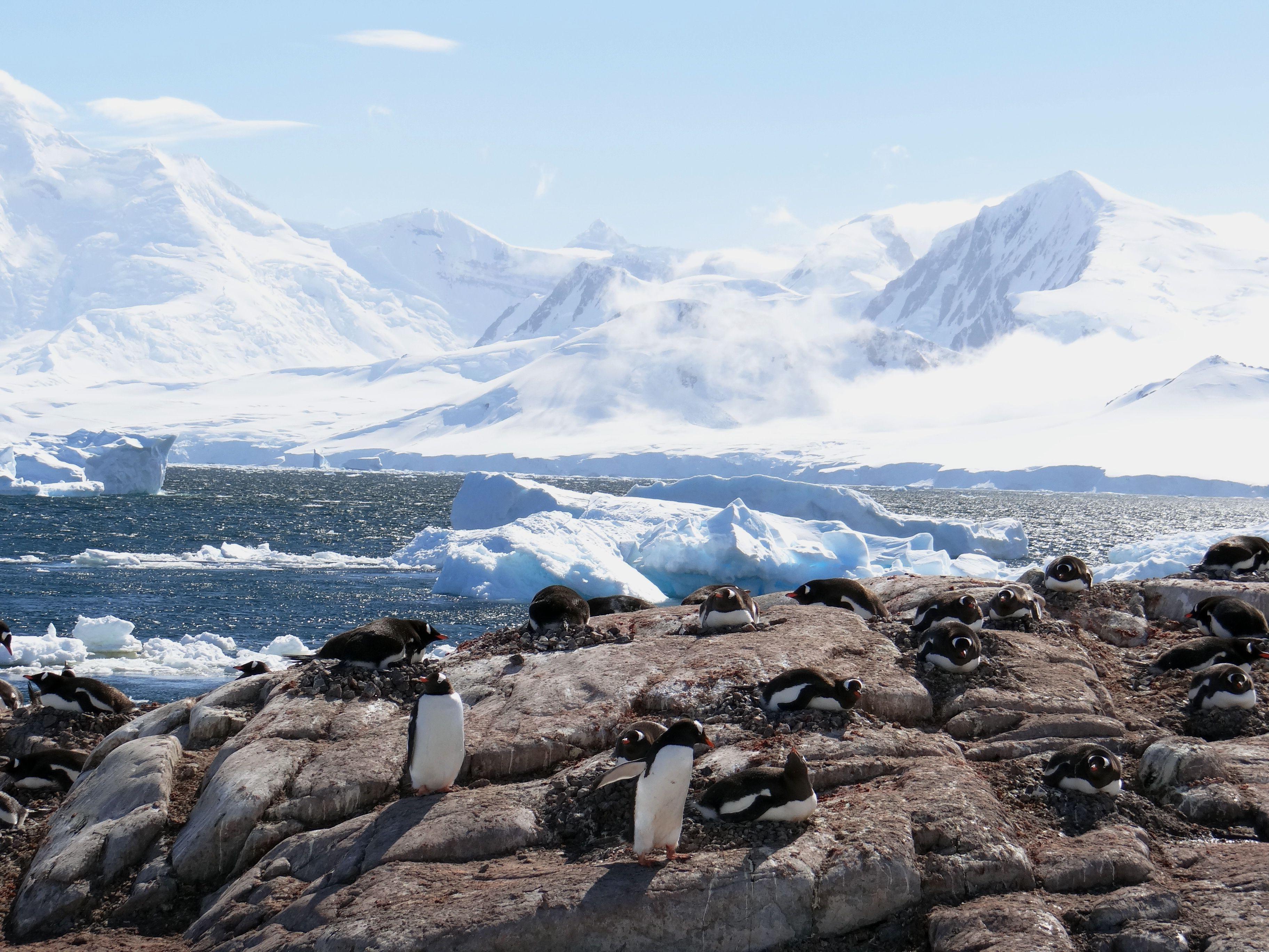 Penguins on the nest in Antarctica