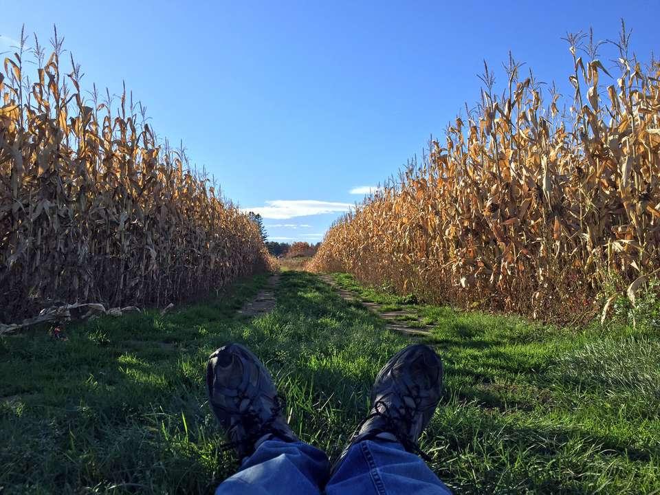 New England Corn Maze Fall Fun