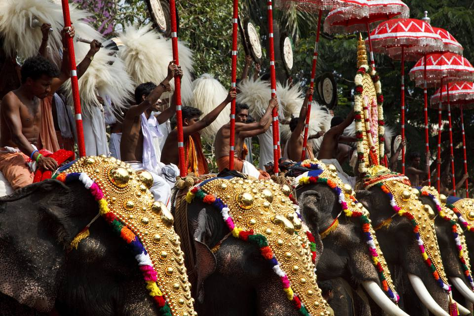 Elephants at the Thrissur Pooram.