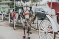 Horse drawn carriages in Jackson Square