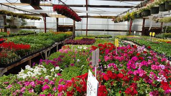 find an albuquerque garden center and get planting - Albuquerque Garden Center