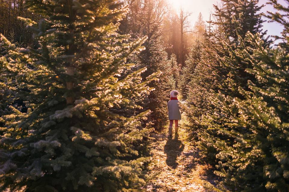 A girl wanders between Christmas trees at a farm.