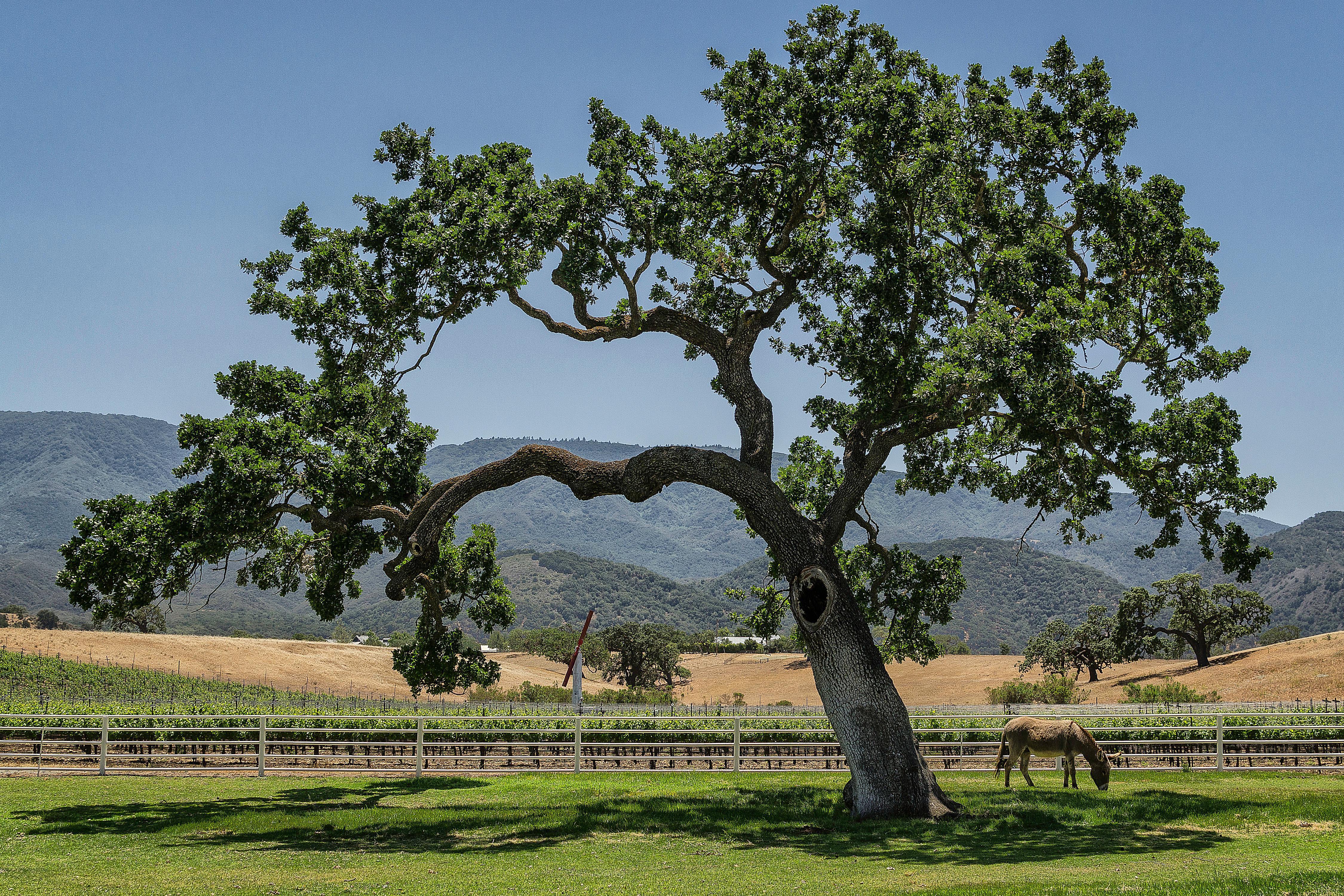 Horse Ranch in the Santa Ynez Valley