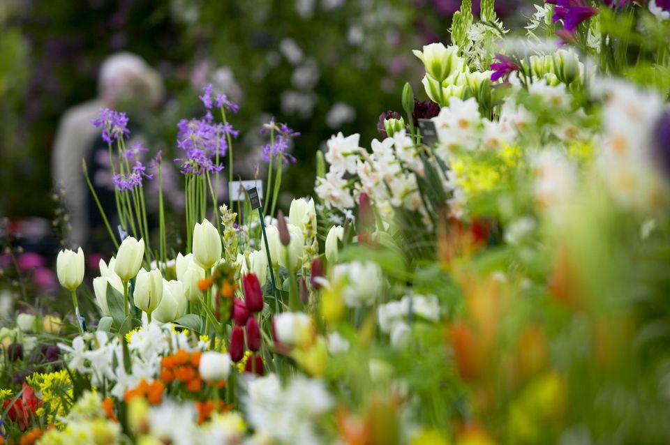 Chelsea Flower Show 2007, Great Pavilion, Tulips