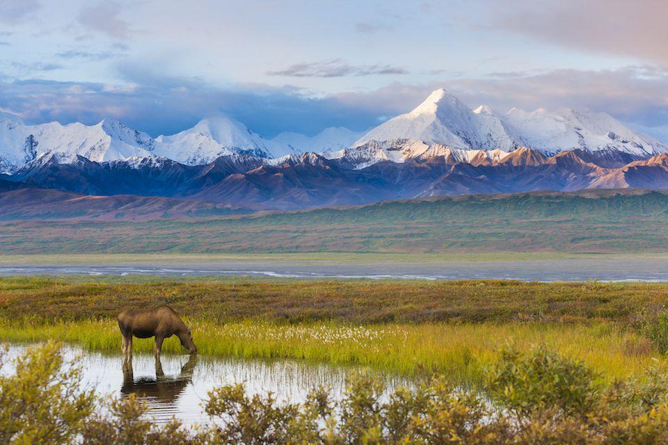 The 5 Best Alaskan Tundra Tours