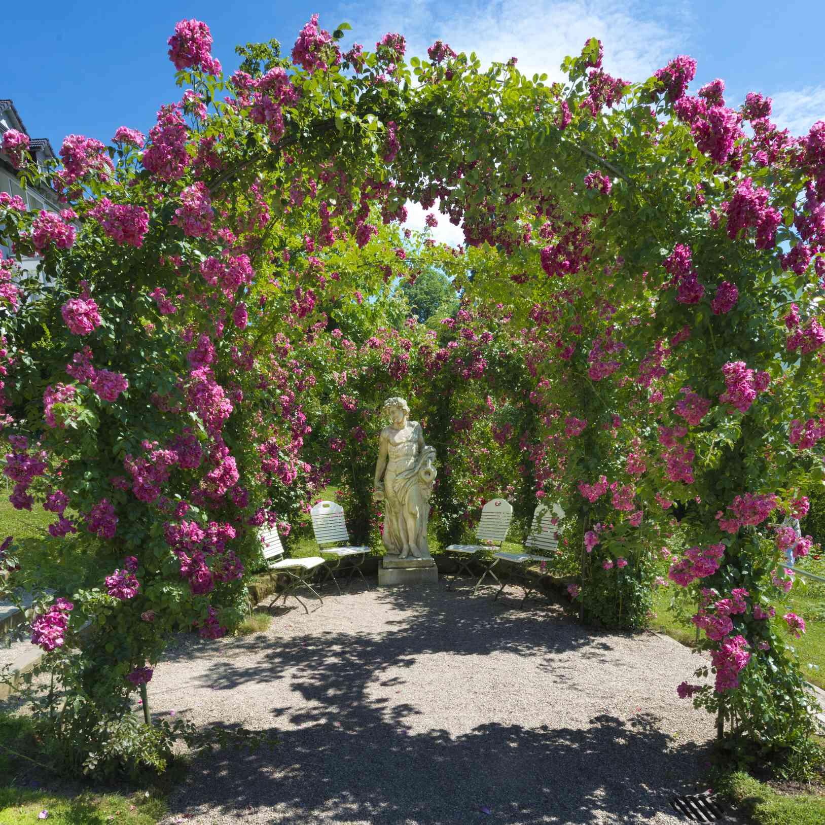 Rose Garden in Baden-Baden