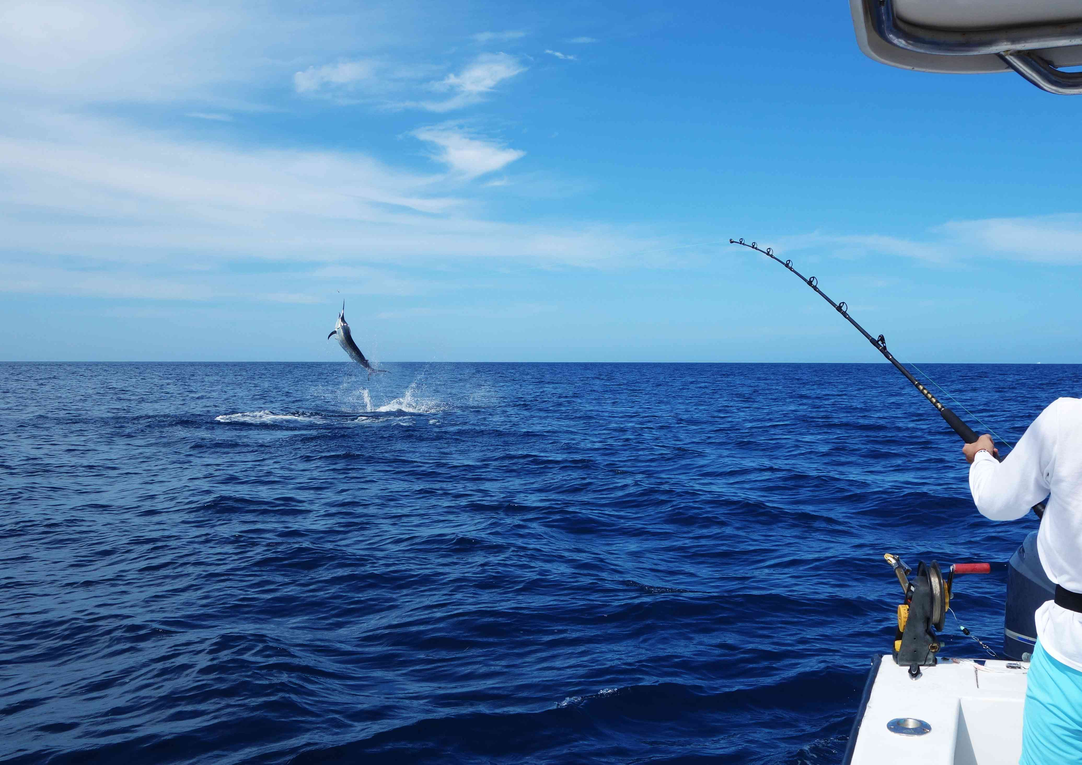 A person holds a fishing pole over the ocean as a marlin leaps above the horizon line