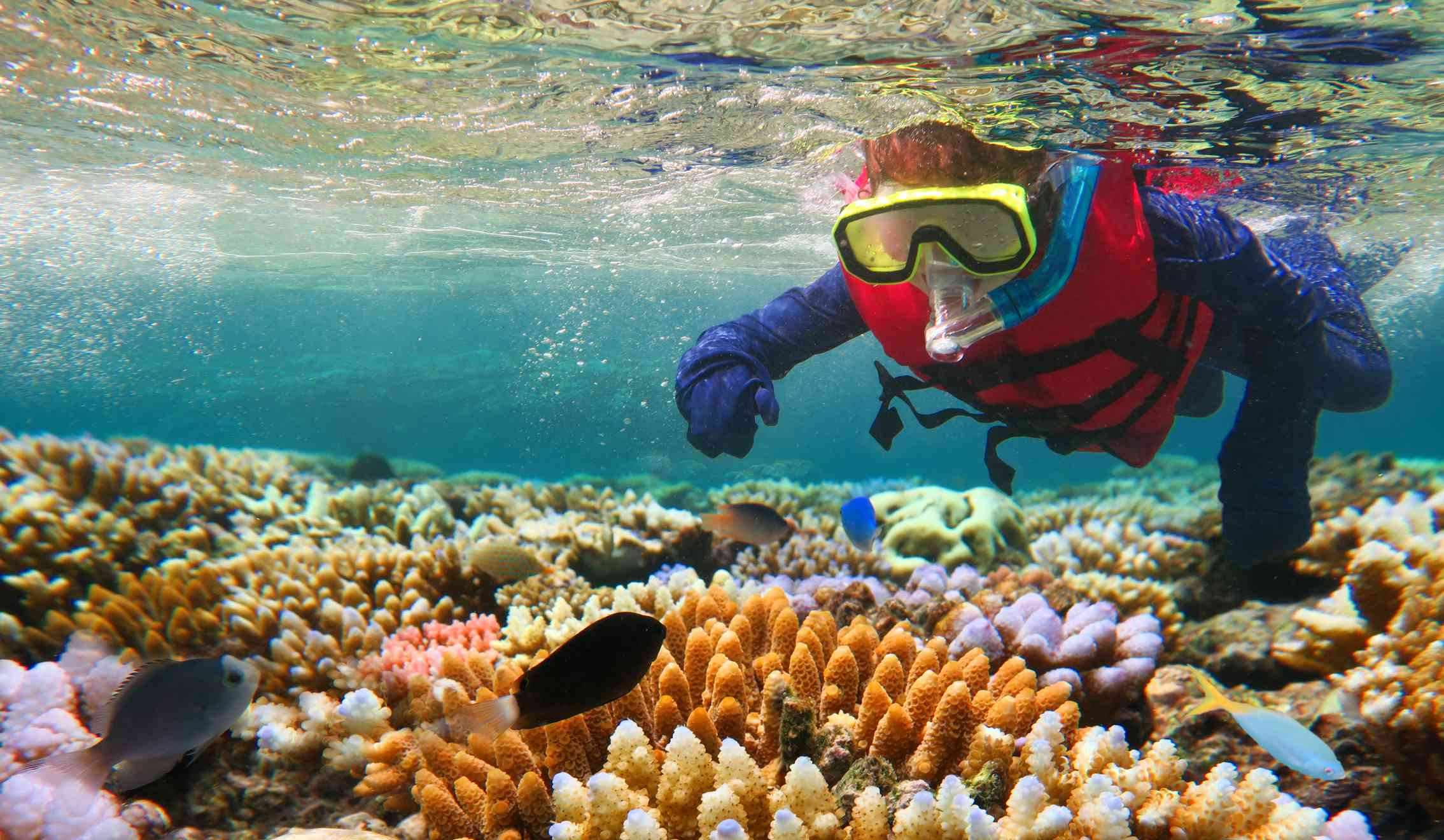 Niño haciendo snorkel en la Gran Barrera de Coral de Queensland Australia