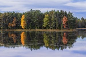 Forest reflecting in lake in autumn, Acadia National Park, Maine, USA