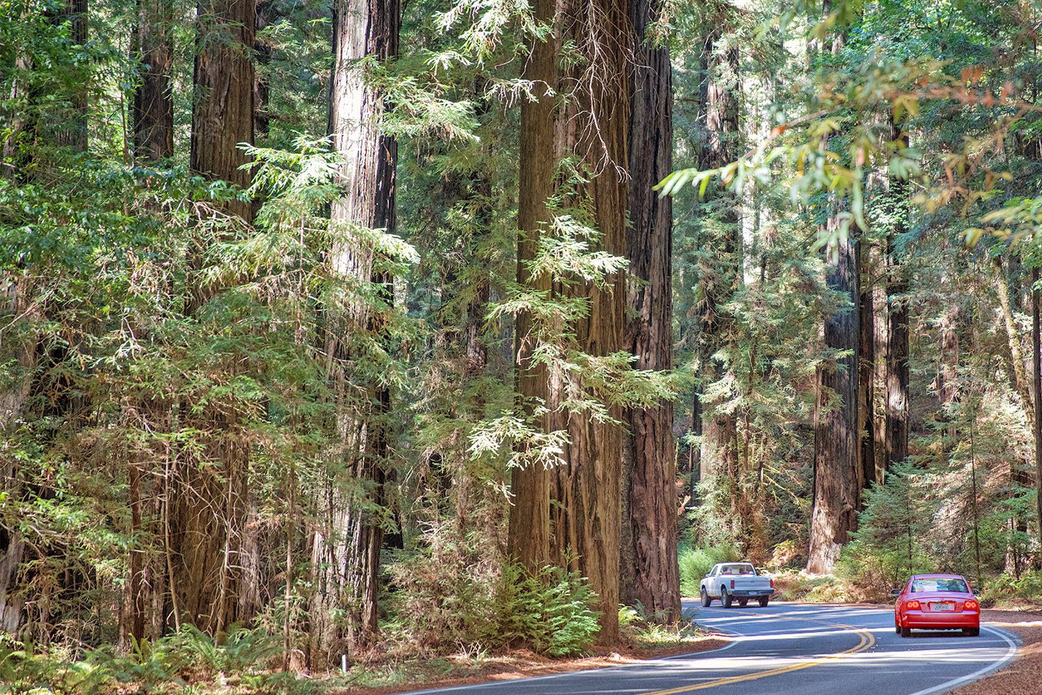 Avenue of the Giants: Northern California's Most Spectacular 39 Miles