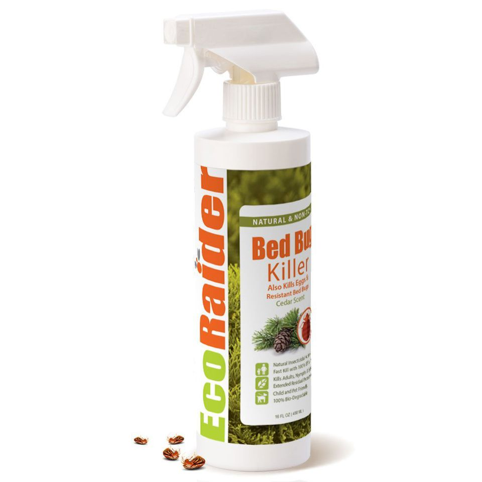 the 7 best bed bug sprays to buy in 2018