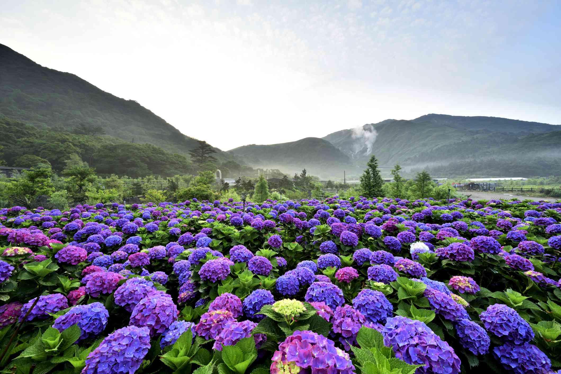 Yangmingshan National Park Taiwan